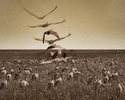 Photograph - The Gathering - Sandhill Cranes by Nikolyn McDonald