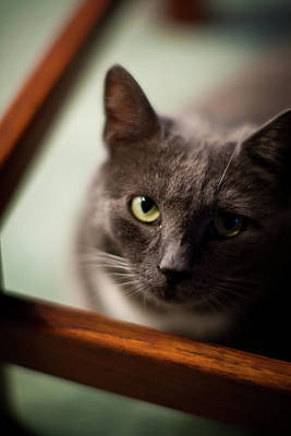 Cat Photograph - The Gaze by Mike Reid