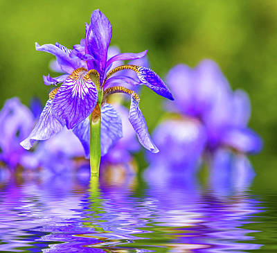 Royalty-Free and Rights-Managed Images - The Gentleness of Spring 2 - Reflection by Steve Harrington