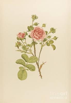 Genus Painting - The Genus Rosa by MotionAge Designs