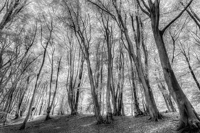 Photograph - The Ghost Forest by David Pyatt