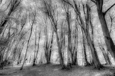 Photograph - The Ghostly Forest by David Pyatt