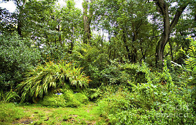 Heligan Photograph - The Giant's Head by Beth Riser