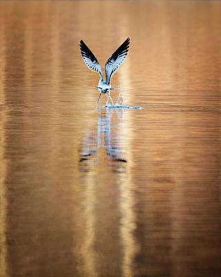 Photograph - The Gift Of Flight by Bill Wakeley