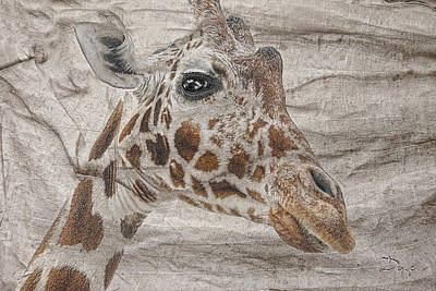 Photograph - The Giraffe  by Dyle   Warren