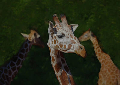 Digital Art - The Giraffes by Ernie Echols