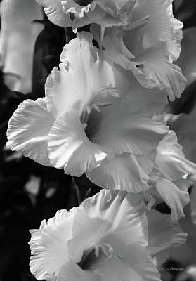 Photograph - The Gladiolus In Black And White by Jeanette C Landstrom