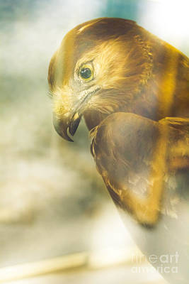 Photograph - The Glass Case Eagle by Jorgo Photography - Wall Art Gallery