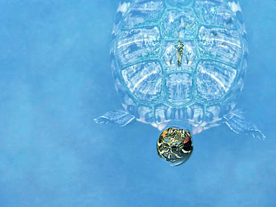 Photograph - The Glass Turtle by Dianna Lynn Walker