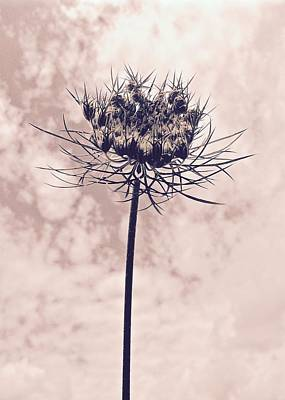 Photograph - The Glory Of A Weed by Tim Good