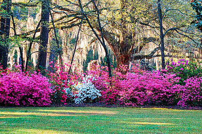 Photograph - The Glory Of Spring by Linda Brown