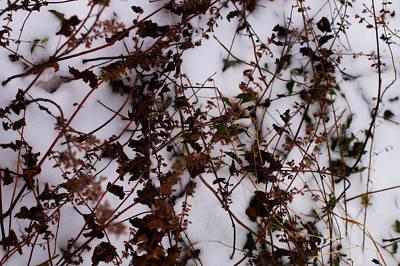 The Glory Of Winter Morn Art Print