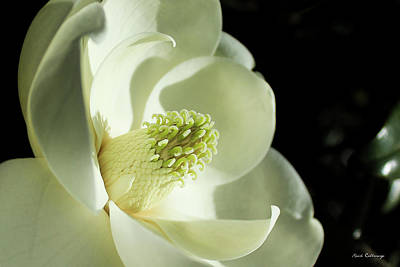 Photograph - The Glow Of Southern Beauty Magnolia Flower Art by Reid Callaway