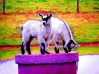 Art Print featuring the photograph The Goats by Tim Mattox