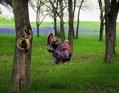 Photograph - The Gobbler by David and Carol Kelly