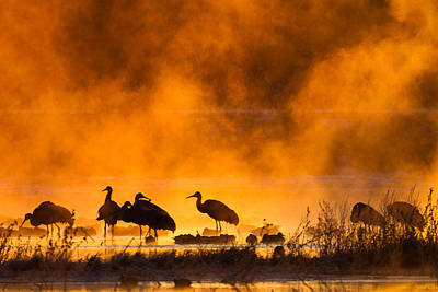 Photograph - The Golden Cranes by Phoo Chan