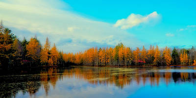 Fall Colors Photograph - The Golden Forest At Woodcraft Camp by David Patterson