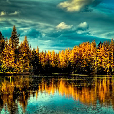 Photograph - The Golden Forest by David Patterson