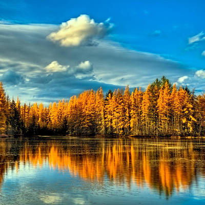 Photograph - The Golden Forest In The Adirondacks by David Patterson