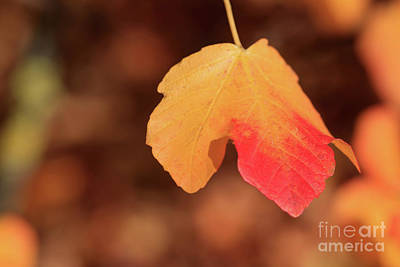 Photograph - The Golden Leaf Of Fall by Tracy Hall