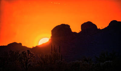 Photograph - The Golden Light Of The Sonoran Desert  by Saija Lehtonen