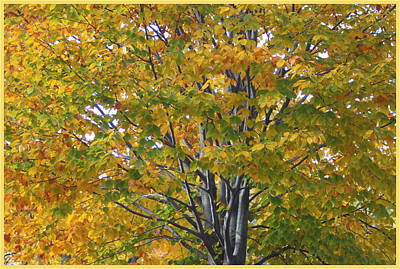 Photograph - The Golden Maple Tree Of Autumn by Dora Sofia Caputo Photographic Design and Fine Art