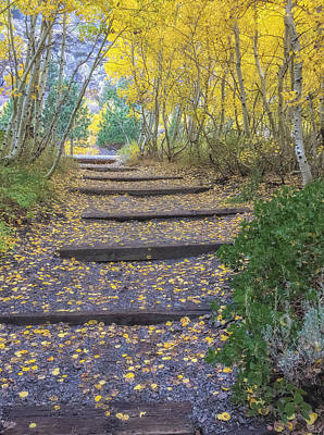 Photograph - the Golden Path 1 by Jonathan Nguyen