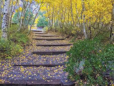 Photograph - The Golden Path 2 by Jonathan Nguyen