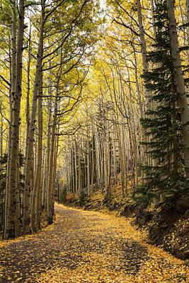 Photograph - The Golden Path  by Saija  Lehtonen