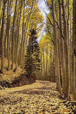 Photograph - The Golden Path Through The Woods  by Saija Lehtonen