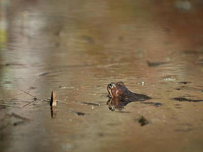 Lady Bug - The Golden Pond 2 by Jouko Lehto