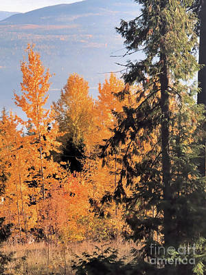 Photograph - The Golden Trees Of Autumn by Victor K
