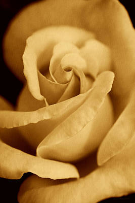 Photograph - The Golden Vintage Rose by Jennie Marie Schell