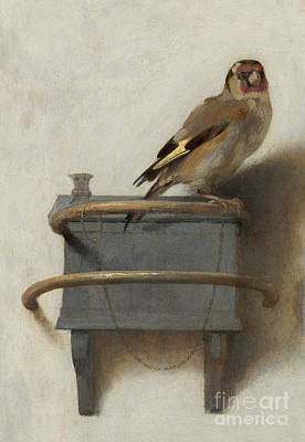 Finch Painting - The Goldfinch, 1654  by Carel Fabritius