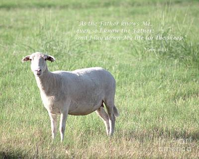 Photograph - the Good Shepherd by Ella Kaye Dickey