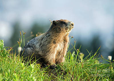 Rodent Wall Art - Photograph - The Good Side by Mike Dawson