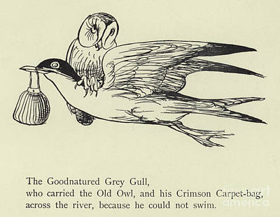 Drawing - The Goodnatured Grey Gull by English School