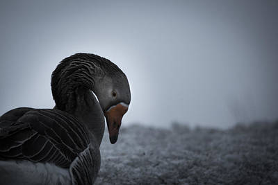 Go For Gold - The Goose by Nathan Larson