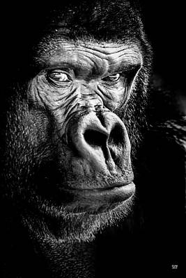 Photograph - Gorilla by David Millenheft