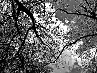 Photograph - The Gothic Sky by Absinthe Art By Michelle LeAnn Scott