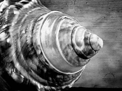Photograph - The Gothic Spiral Seashell by Absinthe Art By Michelle LeAnn Scott