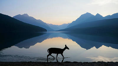 Glacier National Park Photograph - The Grace Of Wild Things by Dustin  LeFevre