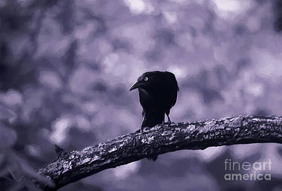 Photograph - The Grackle by Darren Fisher