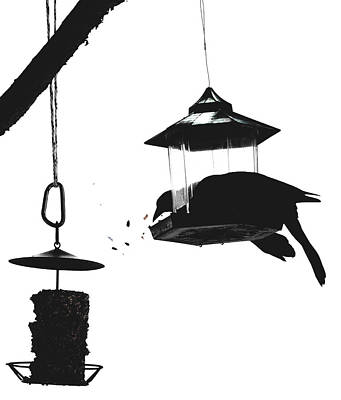 Digital Art - The Grackle Feeder by Aliceann Carlton