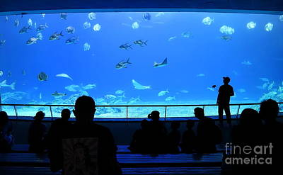 Photograph - The Grand Aquarium At The Marine Museum by Yali Shi