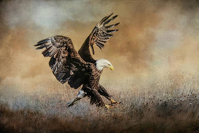 Photograph - The Grass Gathering Bald Eagle Art by Jai Johnson