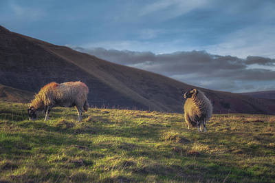 Peak District Photograph - The Grass, Looking Greener by Chris Fletcher