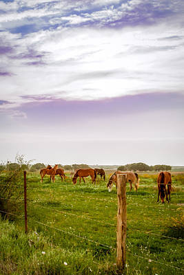 Photograph - The Grass Was Greener by Melinda Ledsome