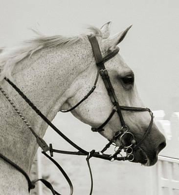 Warmblood Photograph - The Gray by Betsy Knapp