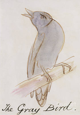 Cute Cartoon Painting - The Gray Bird by Edward Lear